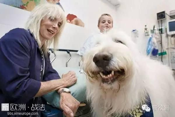 有一家医院宠物可以入内确不是宠物医院!