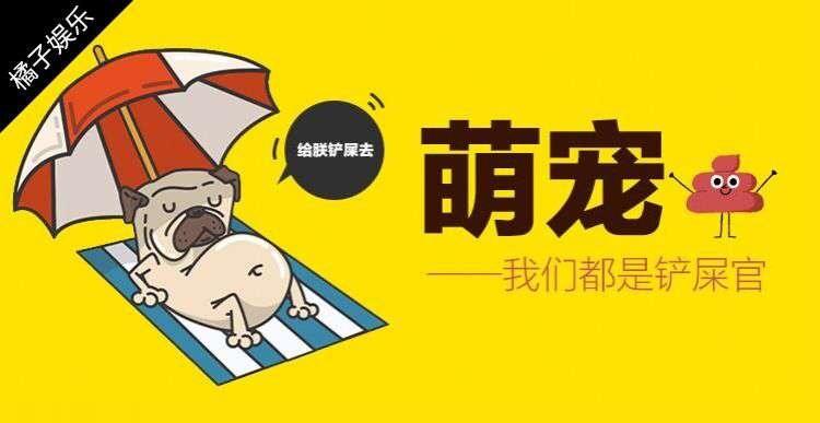 """【萌宠】为了摘掉自家汪""""单身狗""""的头衔,主人给它带回来只喵"""