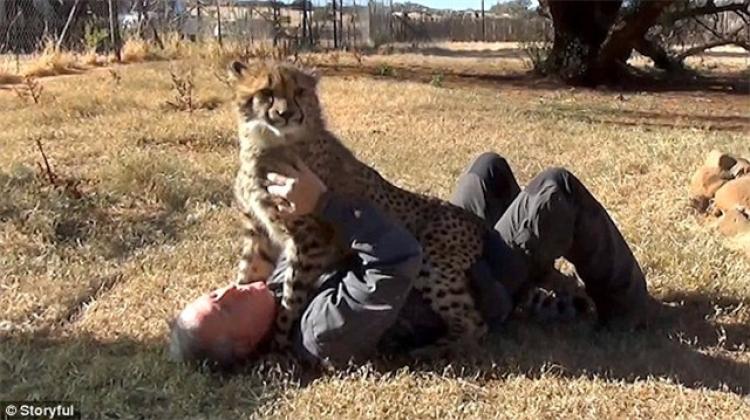 一年后,当猎豹和志愿者重逢,这场面太感人