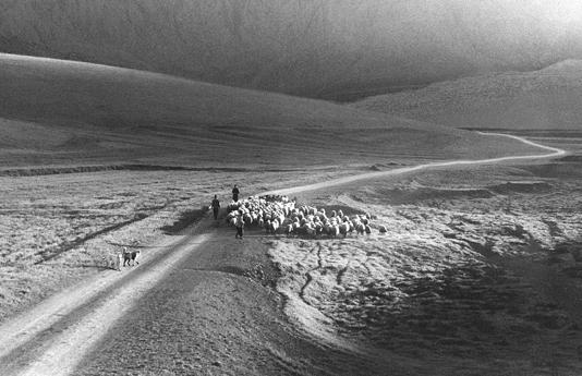 世界失去了一位伊朗电影巨匠阿巴斯《杭州之恋》搁浅
