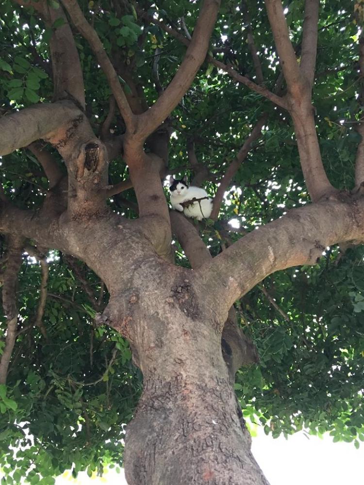 """【萌宠】村口的树上趴着一只猫,它的代号叫""""我很忙"""""""
