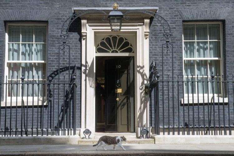 它在首相府做了6年首席捕鼠官,真是流水的首相铁打的猫
