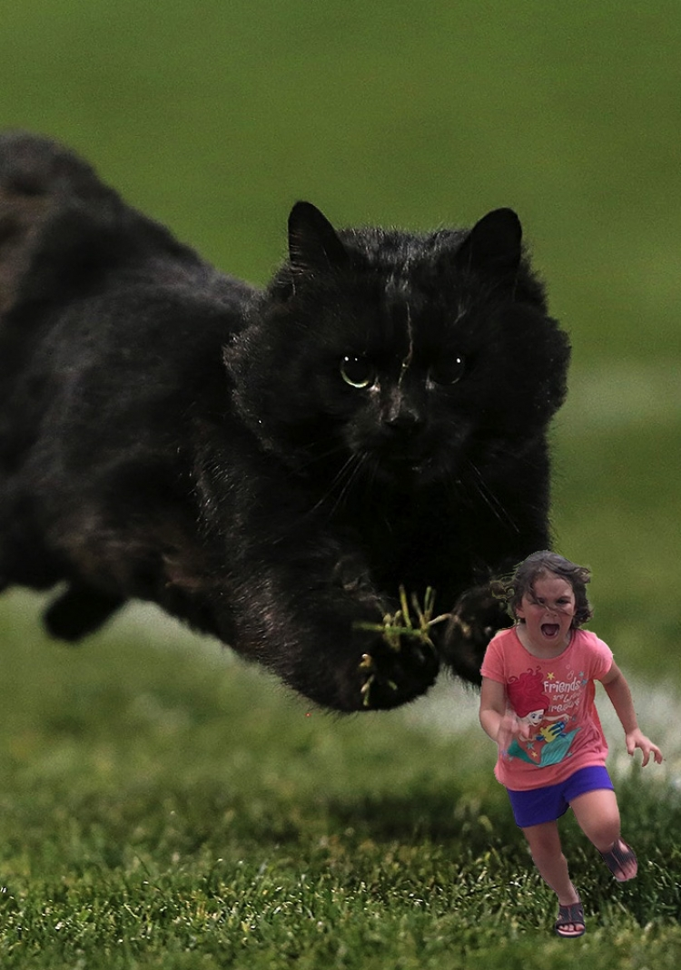 橄榄球赛捧红的黑猫,这两天已经体验了几百种人生吧