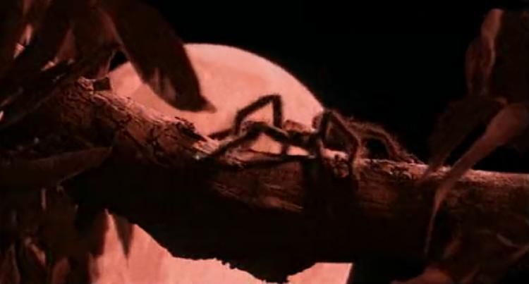 性启蒙、直男癌、童年阴影,《红蜘蛛》是我心中永远的经典!