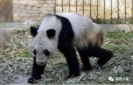 八达岭野生动物园参观