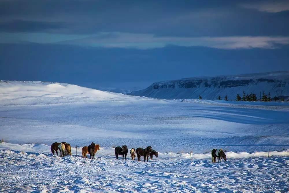 那时的冰岛是冬季