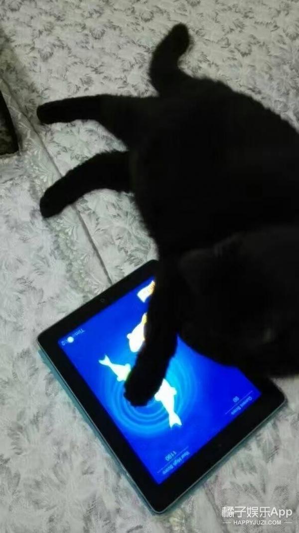 我叫豆豆,是一只排球的斗鸡眼大肥猫!求宠爱!_香港黑色小姐图片