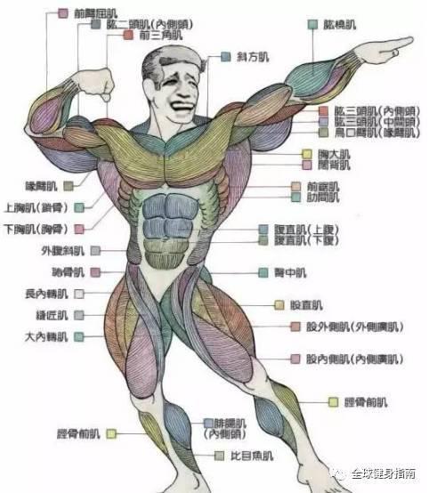 男人有肌肉VS没肌肉,区别到底有多大?! -e430a16c-2088-44ab-a22e-76eae530404e.jpeg!ac1