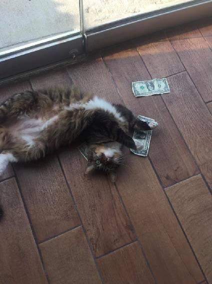 这猫每天吃喝玩乐,竟因这个变成了慈善家,可牛B坏了...