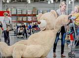 超市出了个2米36的巨型大熊,姚明在它面前都成了小个子!