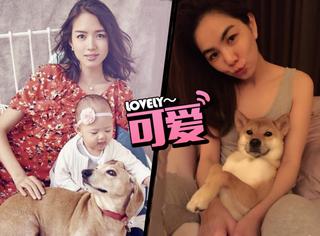 ELLA孕期抱狗被说不卫生,在你眼里它是宠物在她心里却是家人