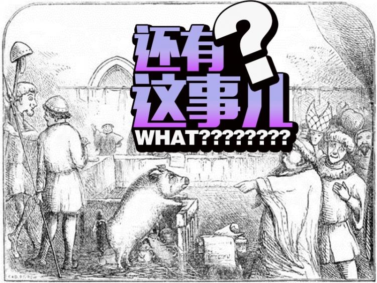 这只来自法国中世纪的猪是第一个被判了死刑的动物