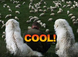 看了这哥们拍的牧羊照片,我也想去乡下放羊了