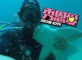 他与一只鲨鱼迷妹保持了7年友谊,每次见面都抱抱
