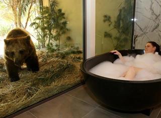 被猛兽盯着洗澡是什么感觉?来这家酒店住一晚就知道了!