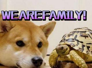 自从柴柴认识了乌龟新朋友后……