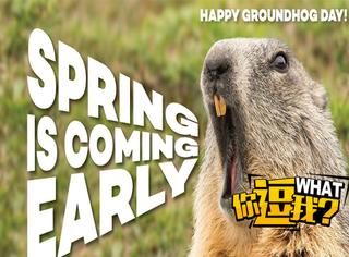 北美最萌萌哒的传统节日,土拨鼠神预测你渴望的春天多会能来