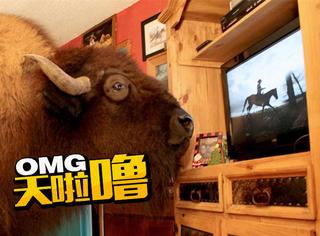大水牛厉害了!活得像人,还是个超级电视迷