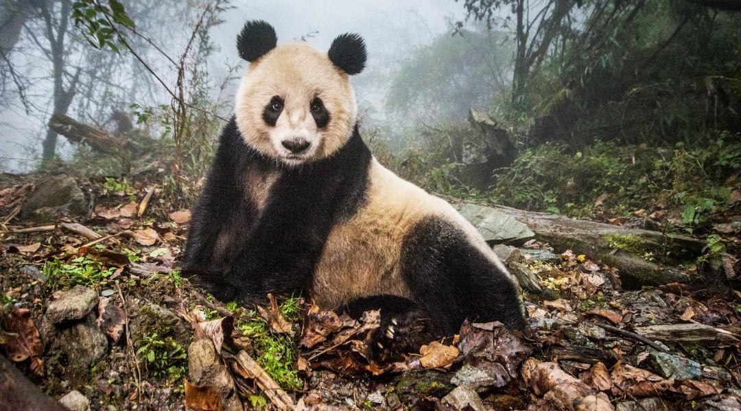 """2017""""荷赛""""揭晓,拿奖的除了中国摄影师还有潘达"""