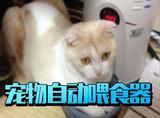 你在用宠物自动喂食器吗?你可能快要被主子抛弃了!