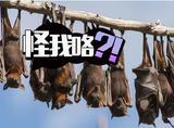 """蝙蝠也会说""""滚""""?科学家发现它们的确会吵架"""