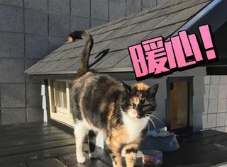 警察蜀黍有多暖你造吗?他给流浪猫盖了房子