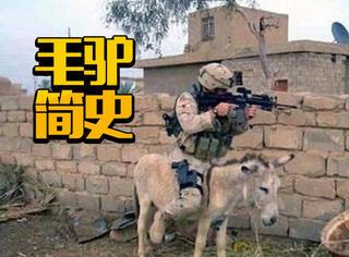 毛驴简史:它们曾是毛驴中的战斗驴
