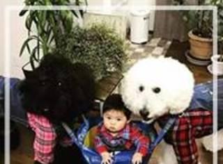 日本奶奶分享的两只狗狗和孙女的日常,突然就火了!
