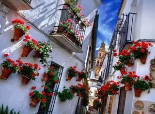 春日去哪赏花?这些西班牙最美的花海你一定不能错过!