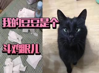 我叫豆豆,是一只黑色的斗鸡眼大肥猫!求宠爱!