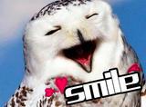 【萌萌动物gif】微笑是最好的语言:那些面部肌肉敲发达的动物们