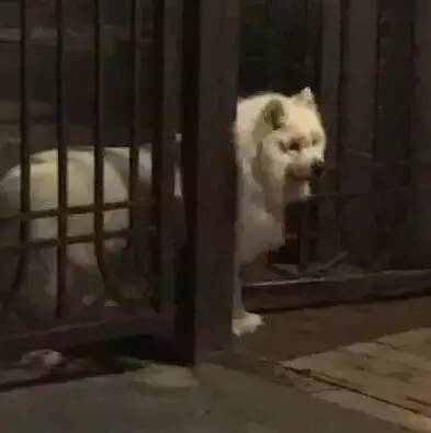 这才叫养狗千日,用狗一时!