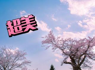 今年日本春天的樱花,都在这里了