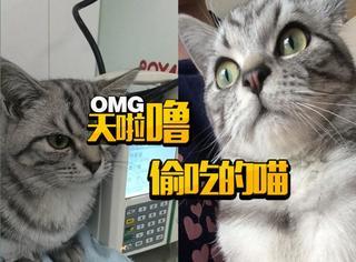 猫咪也爱偷吃?橘子君捉到一只偷吃纸壳盒的喵!