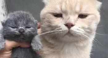 当猫粑粑第一次见到自己的宝宝后却一脸不开心,原来...
