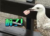 海鸥可不是好惹的,生吞兔子还爱偷假牙
