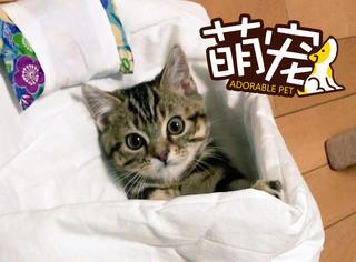 会用猫被子的喵,太萌了吧