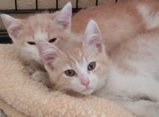 两只猫咪被分别领养走,以为再也见不到对方,没想两年后...