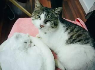 这只会睡觉打呼的猫,治愈了许许多多人的心…