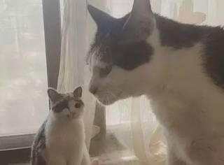 网友给家里的猫咪做了一个羊毛毡分身,猫咪看到后懵B了,连...