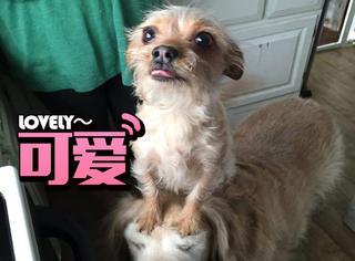 这只小狗做什么都要骑在大狗身上,却让人莫名感动