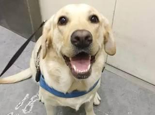 你家的狗狗会笑吗?那些甜死人的笑容,看的心都融化了【屁桃说88】