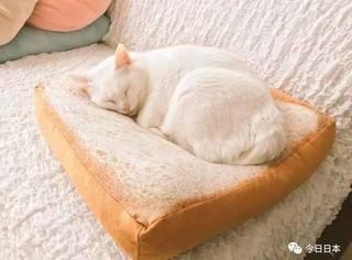 """日网爆红的""""猫咪专用吐司垫"""",据说俘获率100%!这也太诱猫了吧…"""