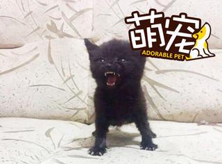 当小猫愤怒时,给你个表情感受感受
