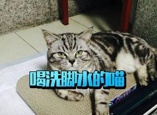 先洗爪子再喝水?拿什么拯救你,我的蠢猫!