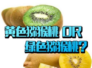 """""""维C水果之王""""猕猴桃,黄色比绿色更有营养?"""