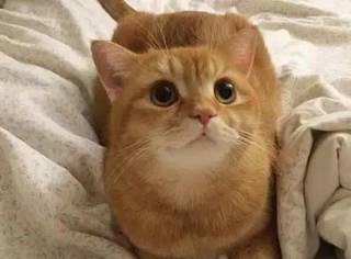 这只猫很平时黏人,但最近慢慢长大的小主人反而黏上了它,最后...