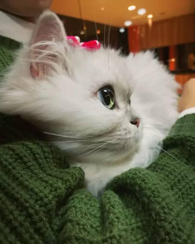 网友表示既然主子不让抱,那就别怪我翻脸不认猫了...