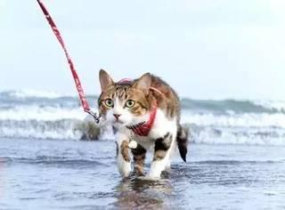主人带猫去海边玩,以为它看到大海,沙滩会害怕,没想到...