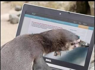 不甘寂寞的企鹅先生也上网求爱了,这画风丑萌丑萌哒